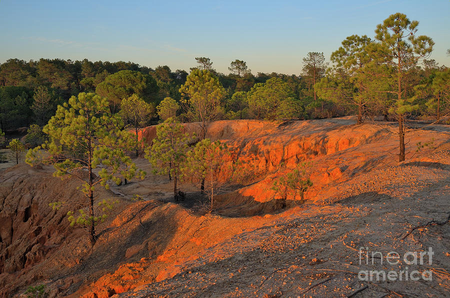 Trees Photograph - Red Sunset Cliffs by Angelo DeVal