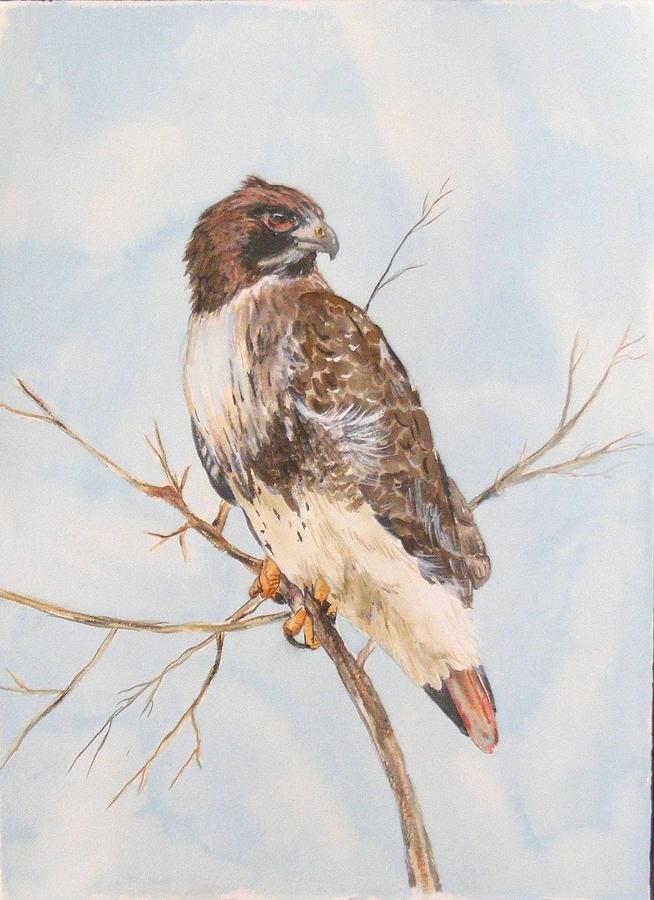 Red Tail Hawk Painting by Diane Ziemski
