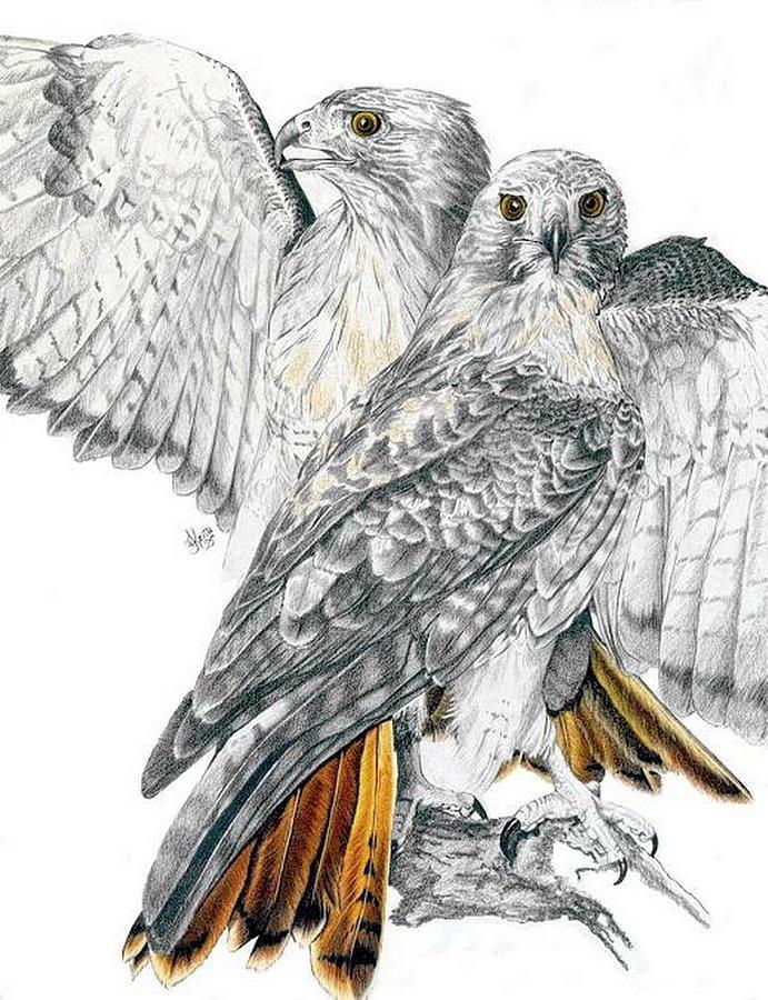 Birds Of Prey Mixed Media - Red-tailed Hawk by Barbara Keith