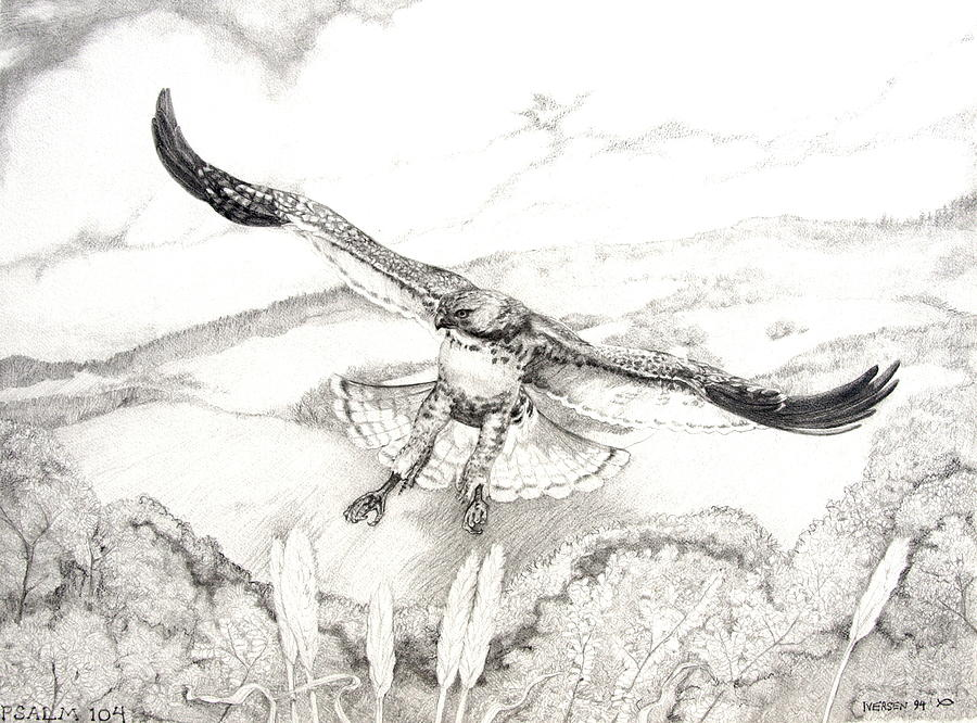 Red-tailed Hawk Drawing - Red-tailed Hawk Of Psalm 104 by Jill Iversen