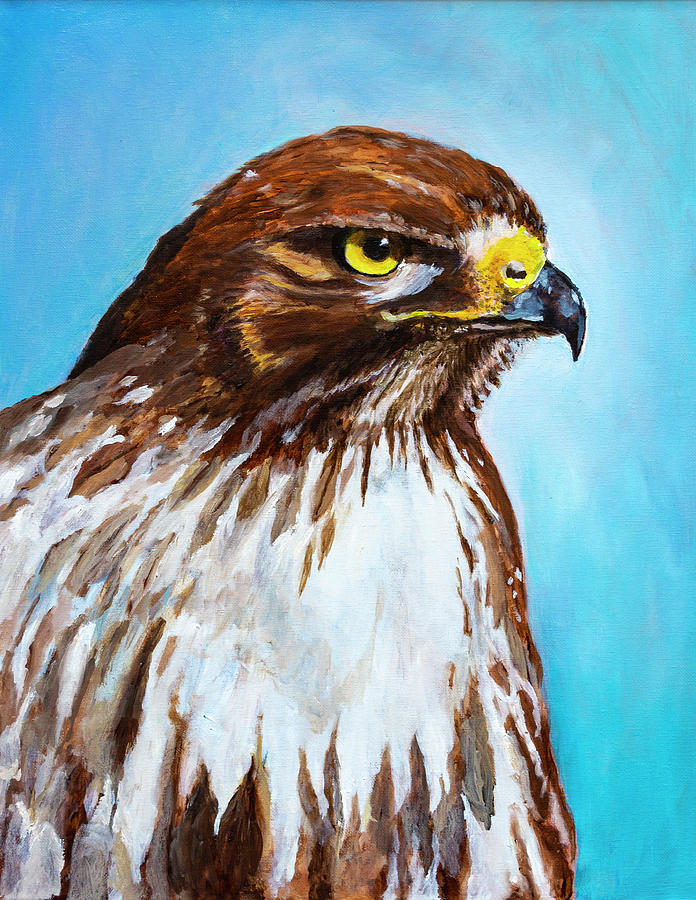 Oil Paint Painting - Red Tailed Hawk Portrait by Rick Mosher