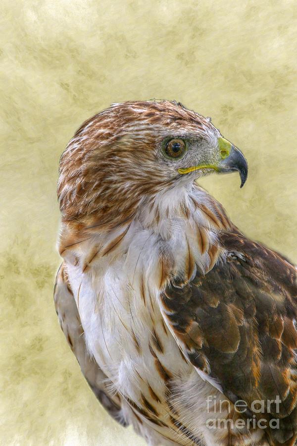 Bird Digital Art - Red Tailed Hawk by Randy Steele