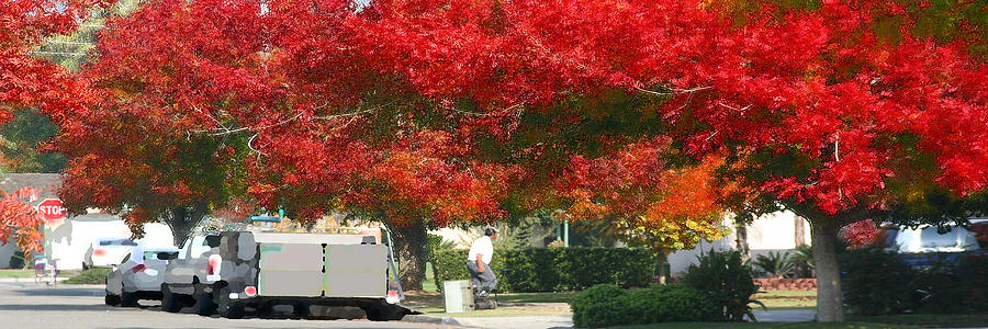 Red Trees by Gail Daley