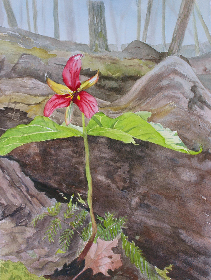 Red Trillium Painting - Red Trillium In The Spring  by Debbie Homewood