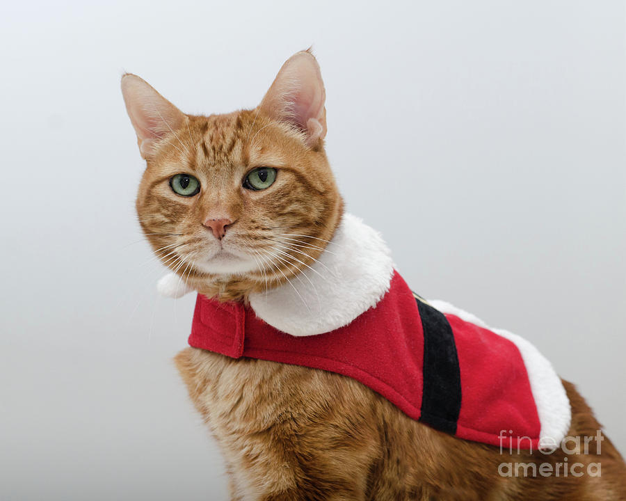 Red Tubby Cat Tabasco Santa Clause by Irina ArchAngelSkaya