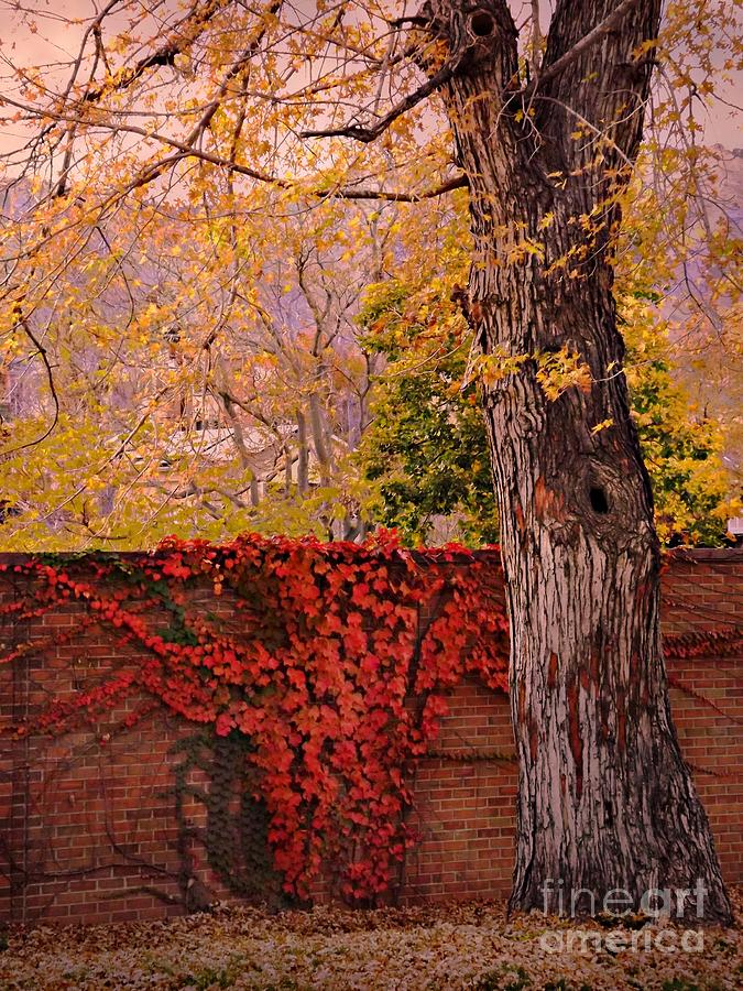 Colorado Digital Art - Red Vine With Maple Tree by Annie Gibbons