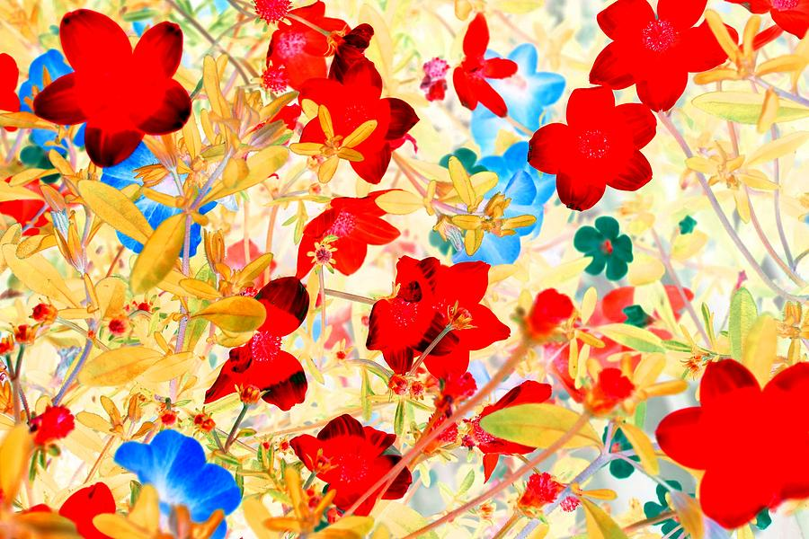 Pop Photograph - Red Wild Flowers by Marianne Dow