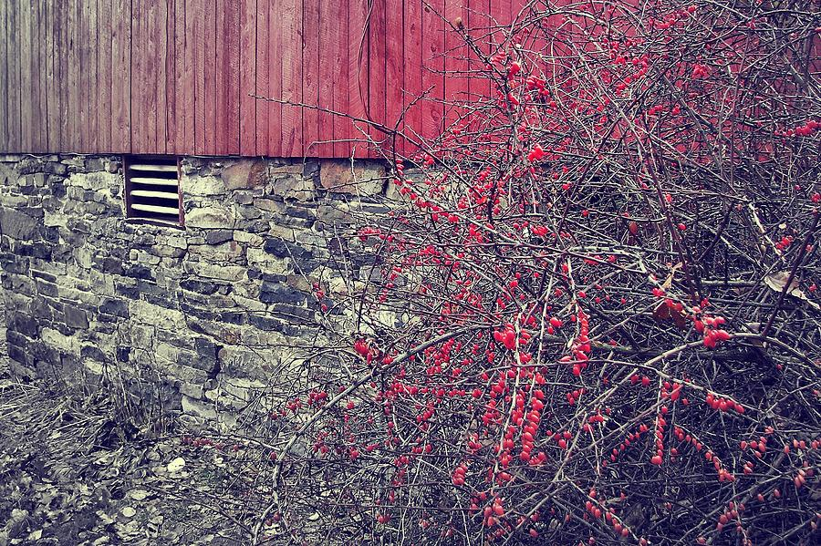 Barn Photograph - Red Winter by JAMART Photography