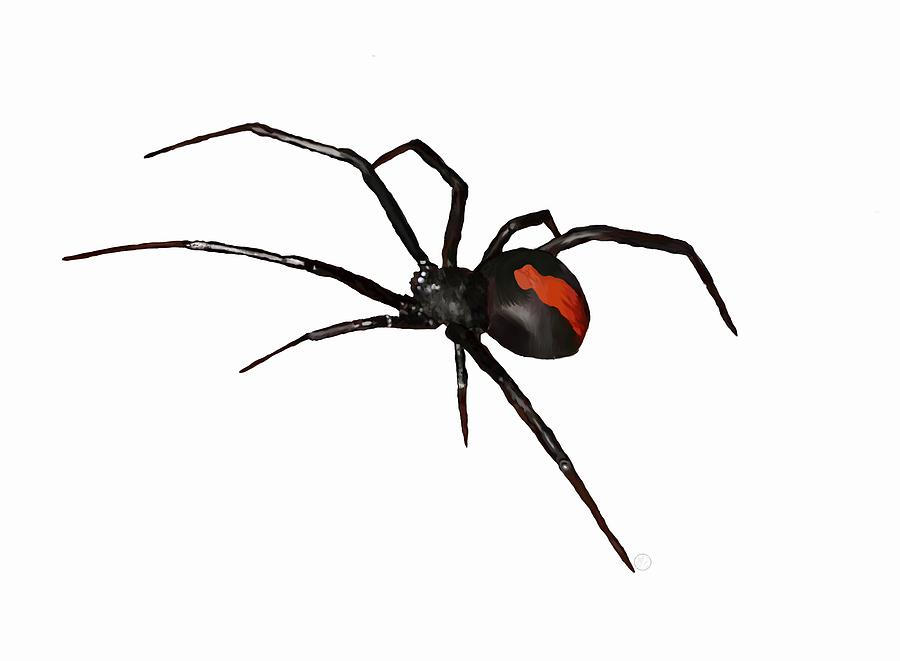 Black Widow Paint Australia