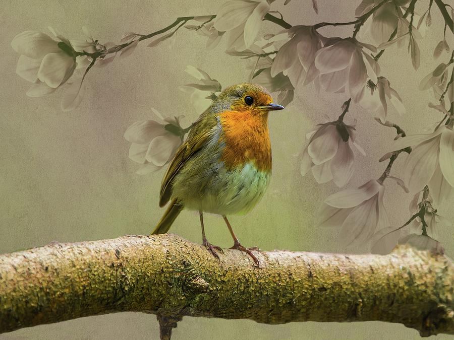 Redbreast Bird by Movie Poster Prints