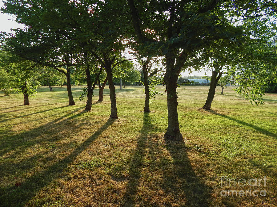 Shadows Photograph - Redbud Grove by Phil Perkins