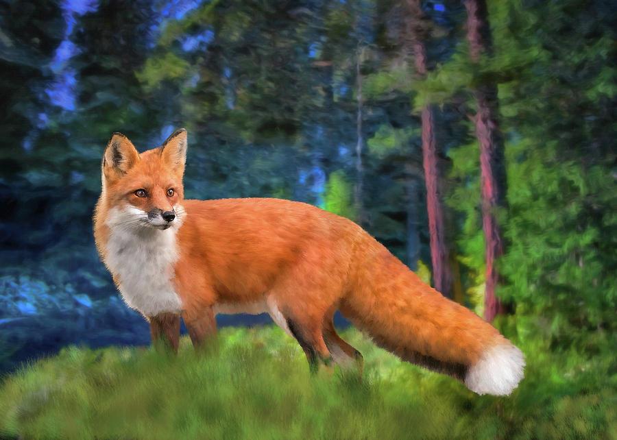 Red Fox by Bill Johnson