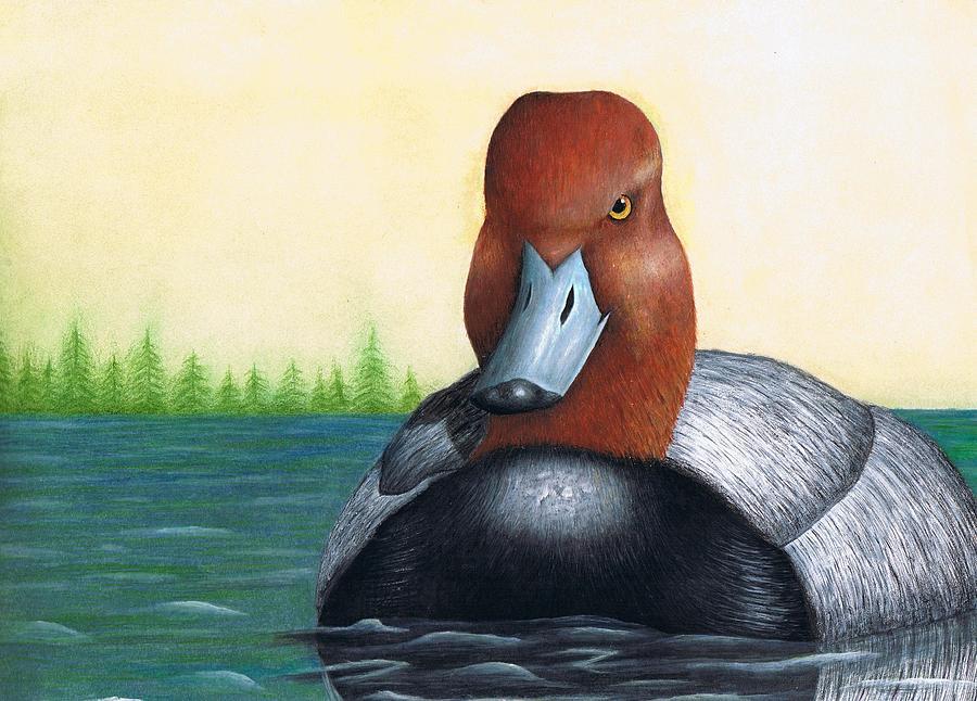 Duck Painting - Redhead by Brandon Sharp