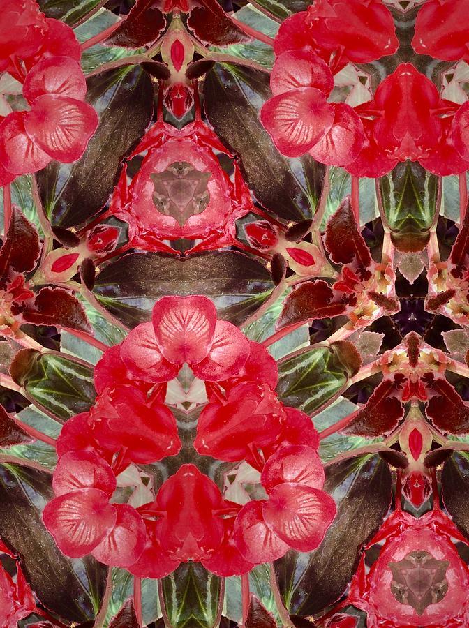 Nature Photograph - Reds Of Nature by Sylvan Adams