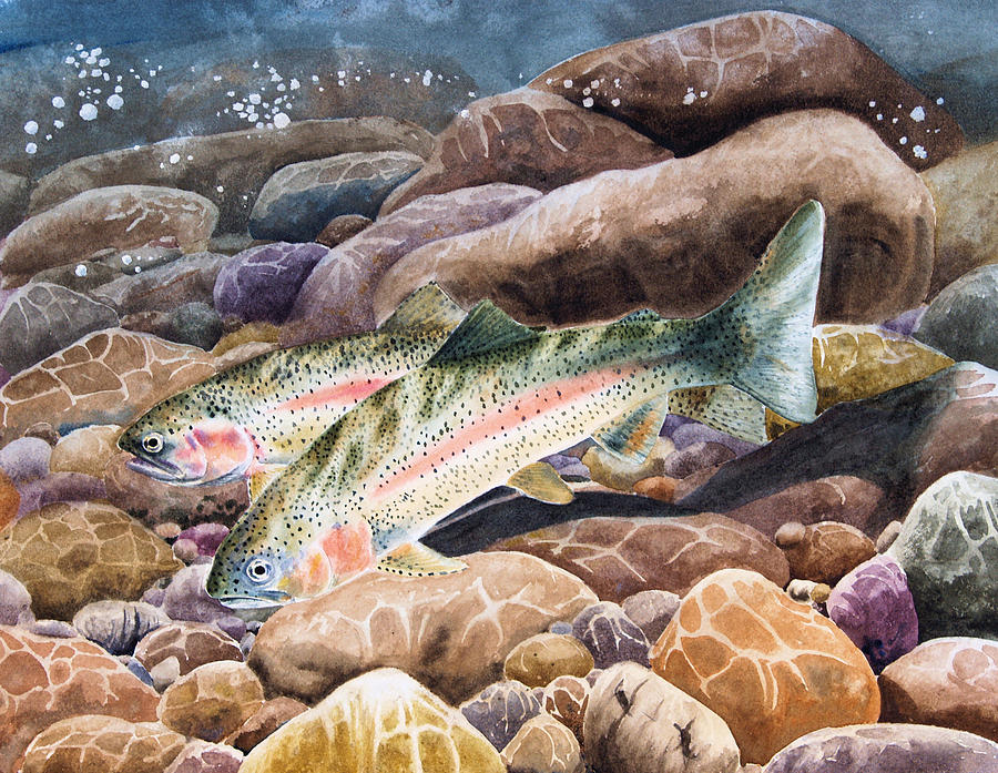 Trout Painting - Redsides by Patrick Entenmann