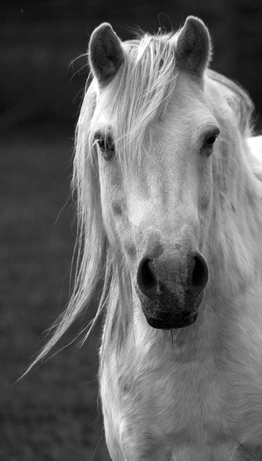 Horse Photograph - Redwings Horse In Monotone2 by Darren Burroughs