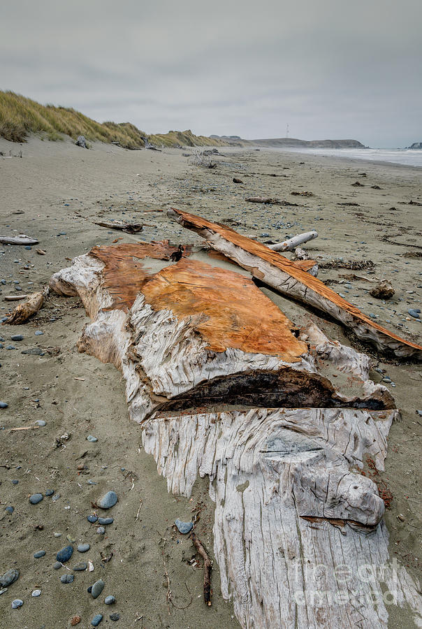 Redwood Buried In Kellog Beach Photograph