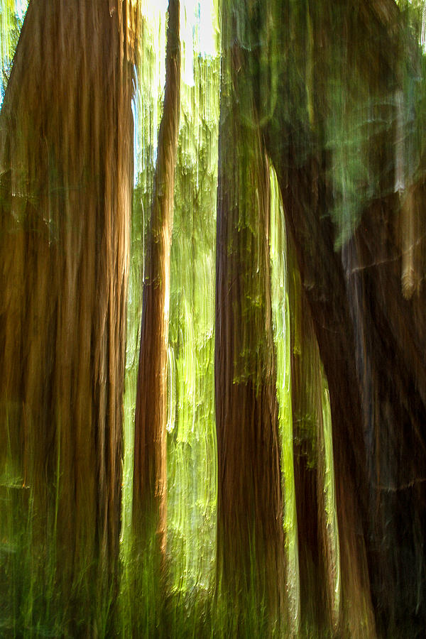 Redwood dream photograph by bill gallagher - The hideout in the woods an artists dream ...