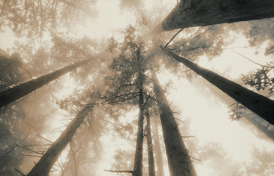 Horizontal Photograph - Redwood Forest, Northern California, Usa by Mel Curtis