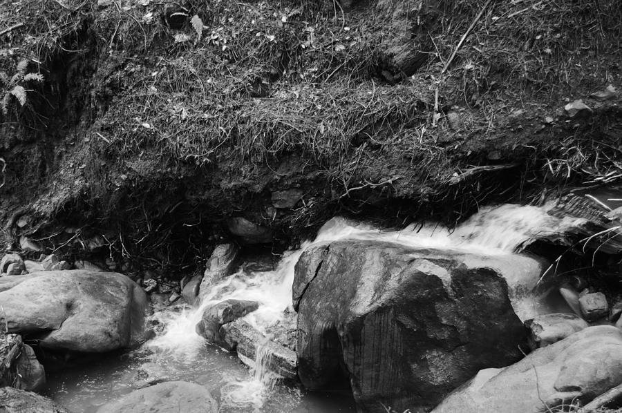 Redwood Rushing Stream 2  Photograph by Warren Thompson
