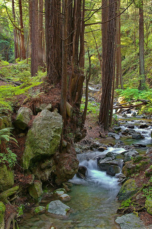 Limekiln State Park Photograph - Redwood Stream by Arthurpete Ellison