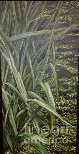 Swamp Painting - Reeds  by Asha Porayath