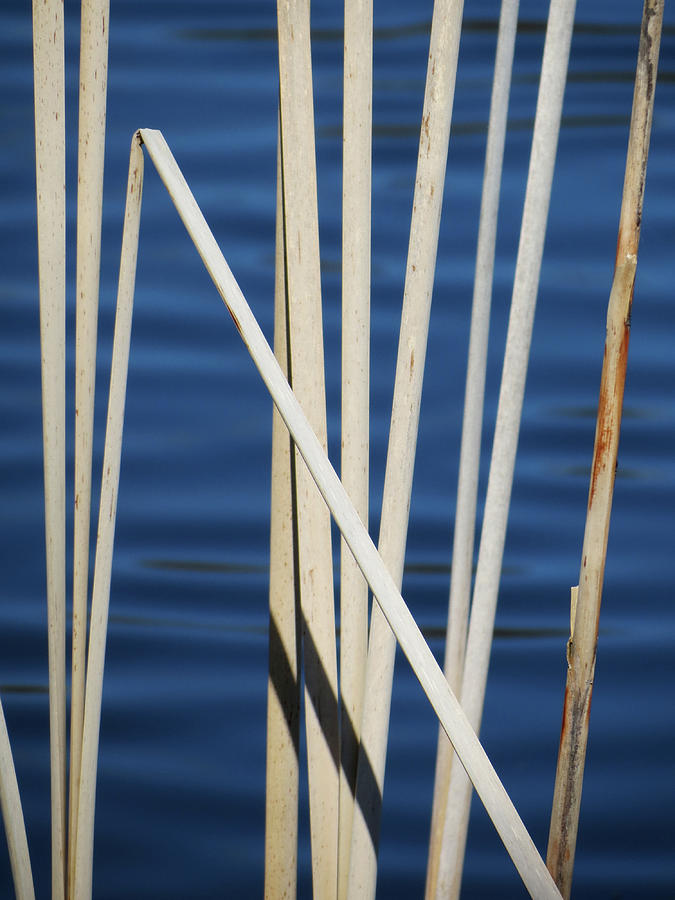 Water Photograph - Reeds by Azthet Photography