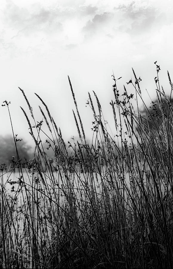 Reeds of Black by JGracey Stinson