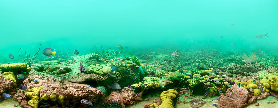 Reef Digital Art - Reef Life by Owen Caddy