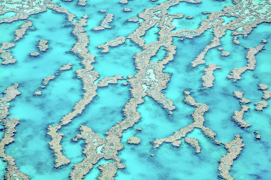 Reef Patterns Photograph