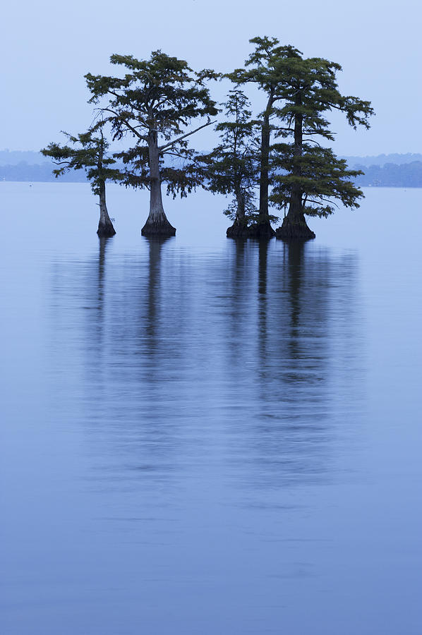 Tennessee Photograph - Reelfoot Reflections by Eric Foltz