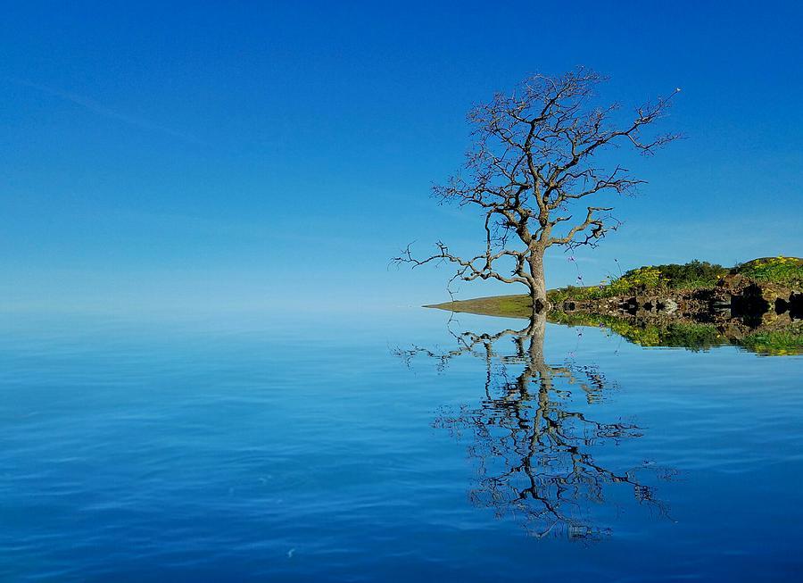 Reflect by Nick Knezic