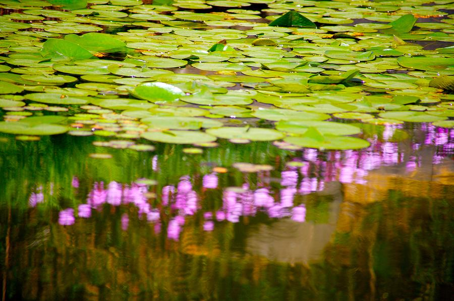 Floral Photograph - Reflected Flowers And Lilies by Paul Kloschinsky