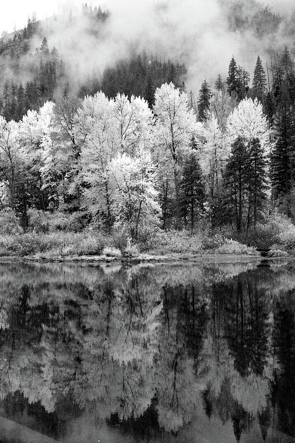 Reflected Glories by Jenny Mead