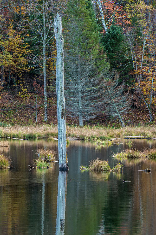 Autumn Photograph - Reflected Tree by Paul Freidlund