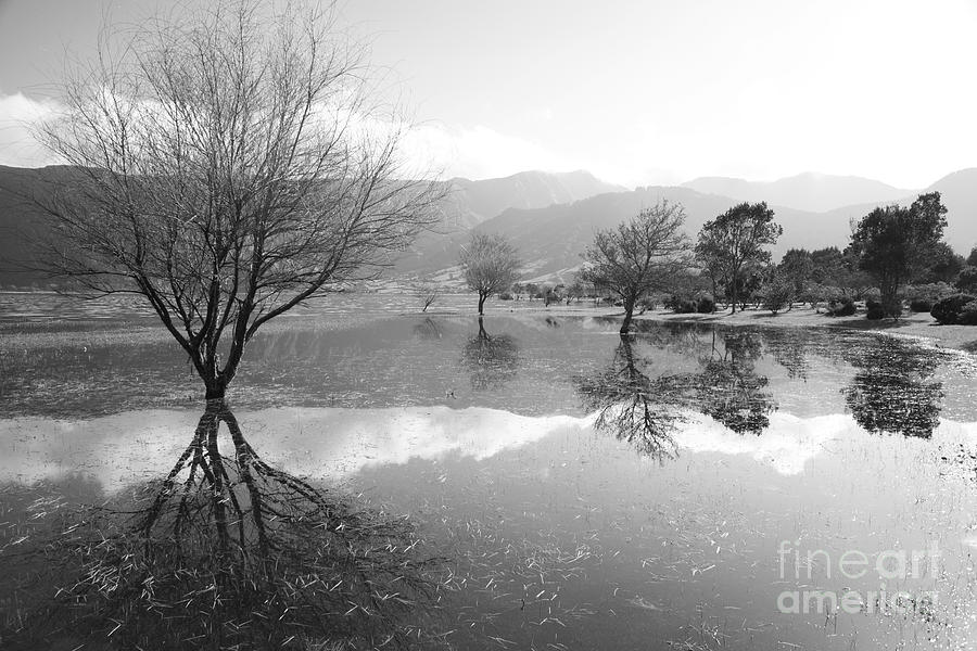 Lake Photograph - Reflected Trees by Gaspar Avila