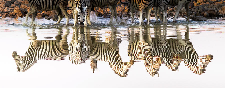 Namibia Photograph - Reflected Zebras by Linda Oliver