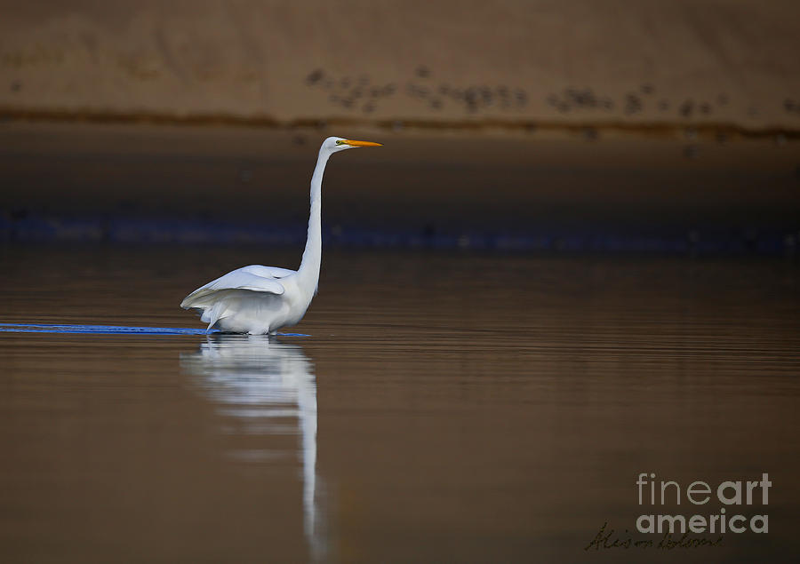 Reflecting Elegance by Alison Salome