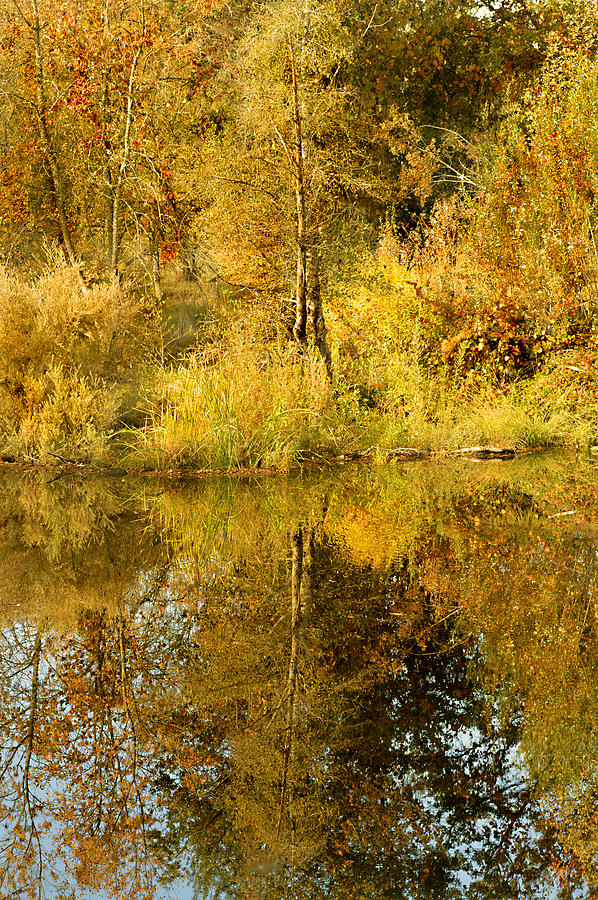 Autumn Photograph - Reflecting On Autumn Leaves by Pamela Patch