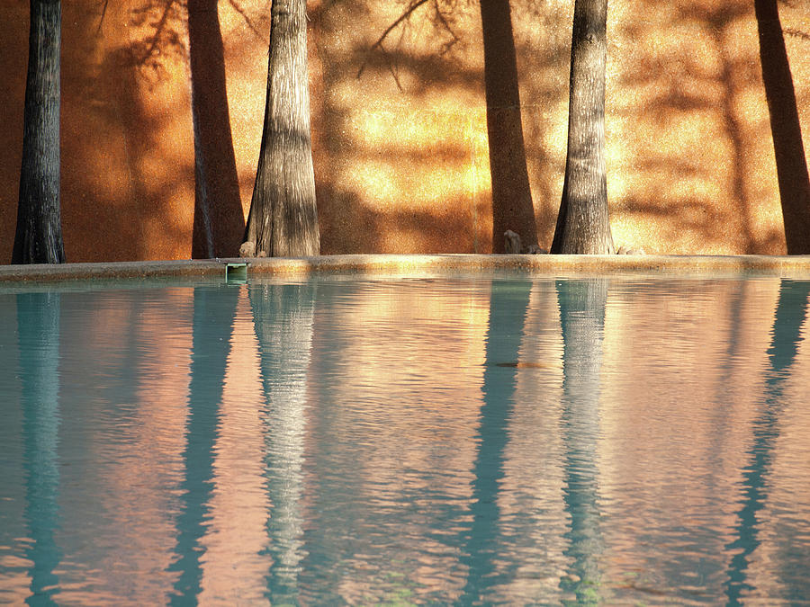 Trees Photograph - Reflecting Trees by Ken Kirk