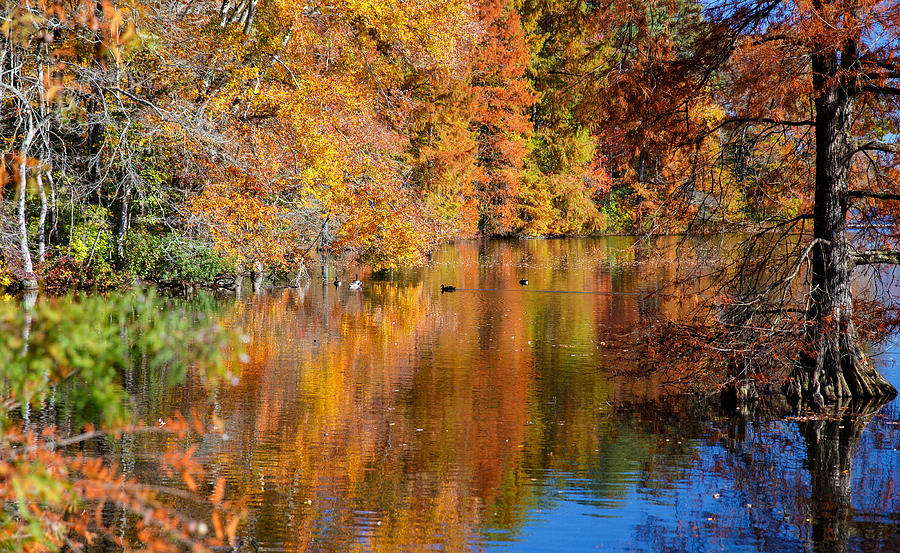 Trap Photograph - Reflected Fall Foliage by Allan Levin