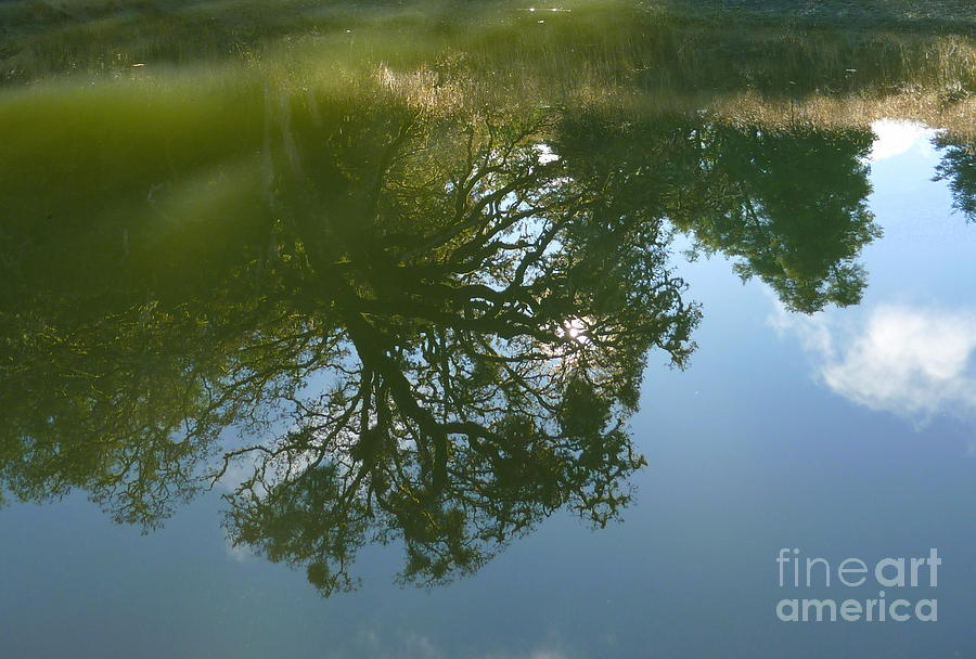 Reflection Photograph - Reflection by JoAnn SkyWatcher