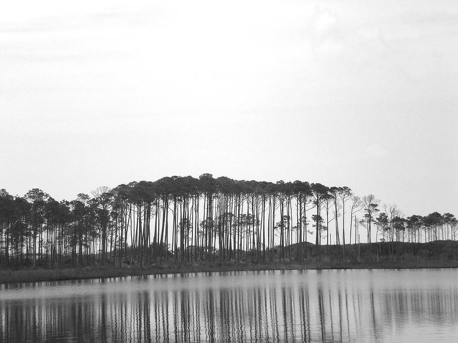 Trees Photograph - Reflection by Laura Burchfield