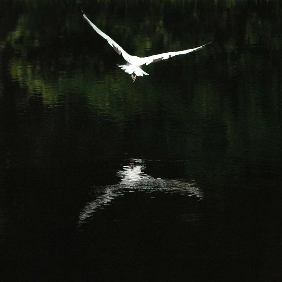 Animals Photograph - Reflection Of Flight by Tito Santiago