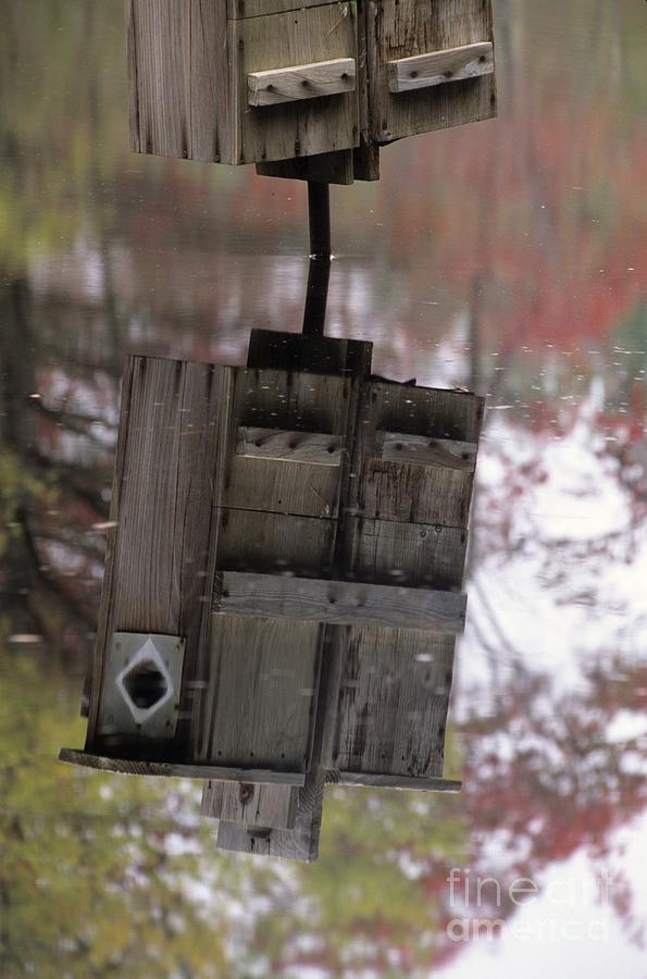 Wood Duck Photograph - Reflection Of Wood Duck Box In Pond by Erin Paul Donovan