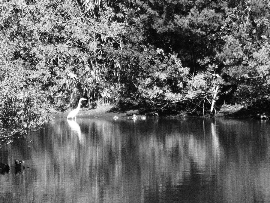 Reflection Pond Photograph by Cory Robertson