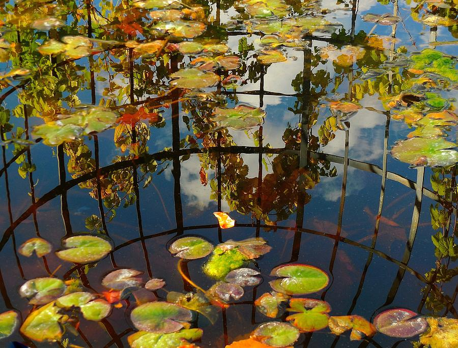 Reflection Pond by My Lens and Eye - Judy Mullan -
