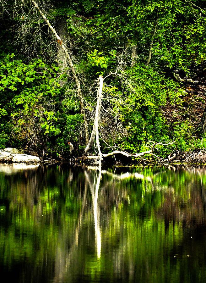 Tree Photograph - Reflection  by Terepka Dariusz