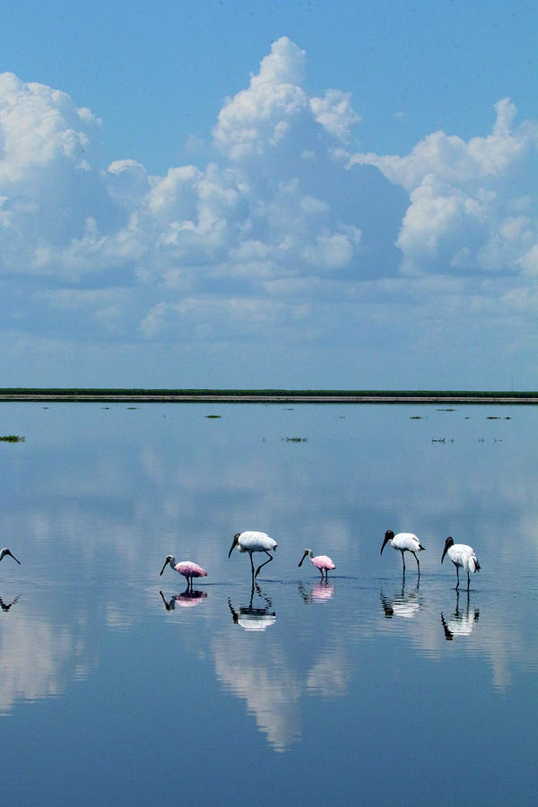 Florida Photograph - Reflections At The Wetland by Karen Lindquist