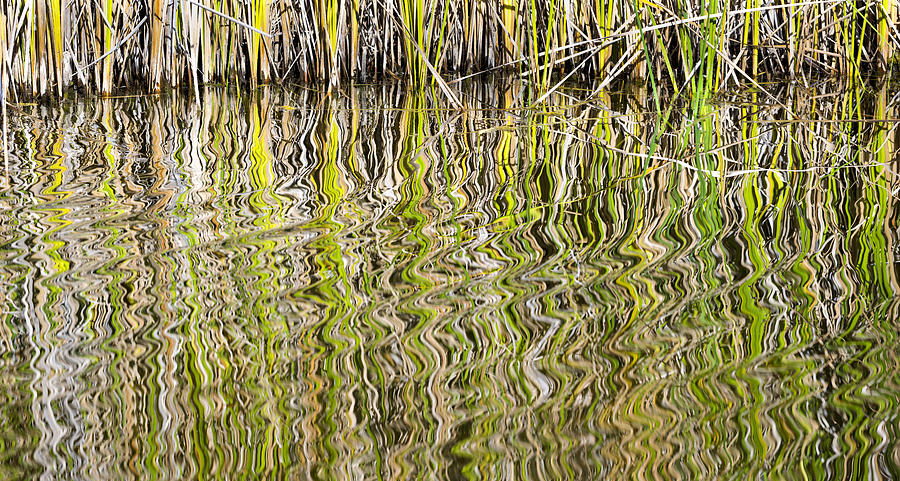 Water Photograph - Reflections by Fred Newman